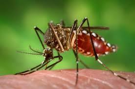 Chikungunya, la Lombardia invia 160 unità di sangue a Roma